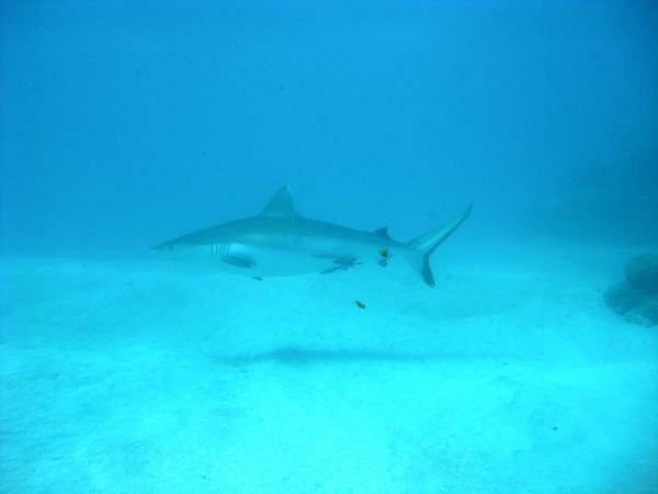 Album - Requins