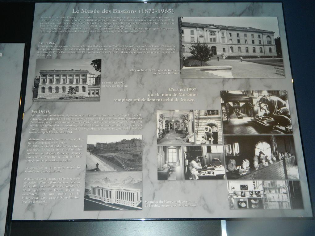 voici un apercue de ma visite du museum de geneve