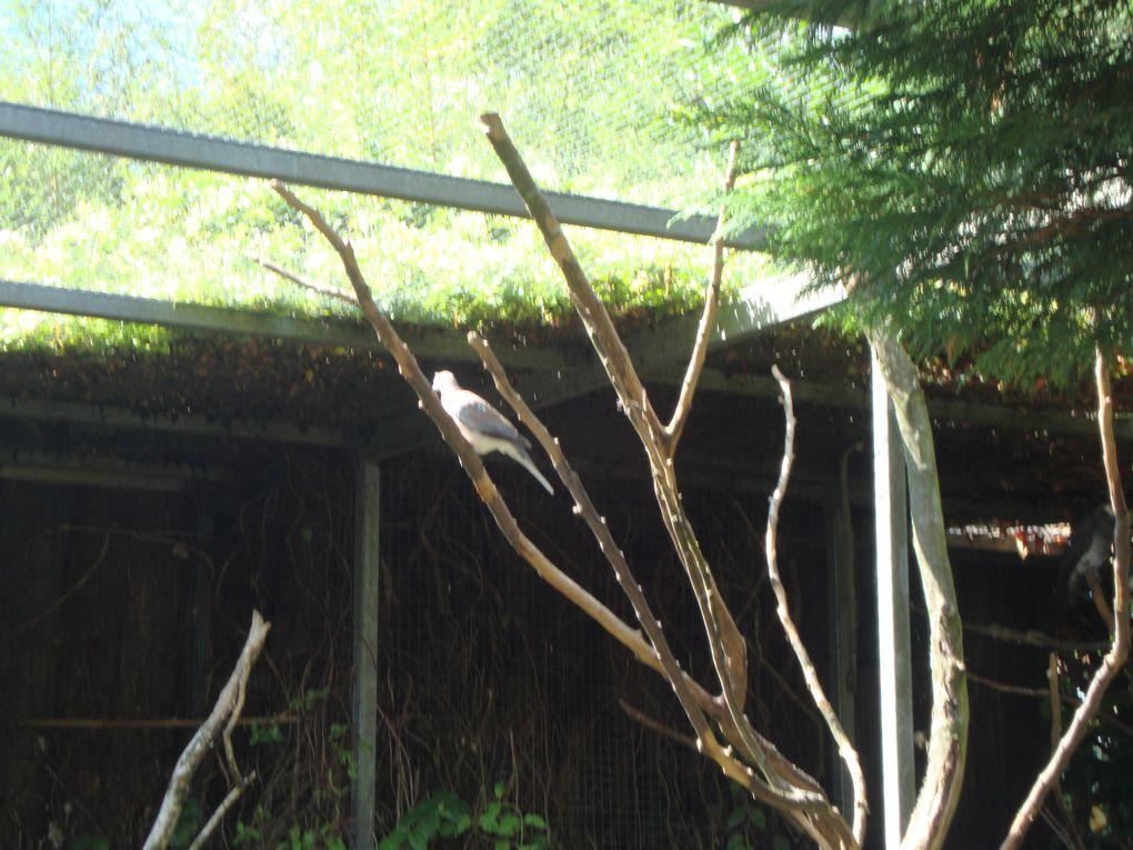 voici un aperçus du parc des oiseaux