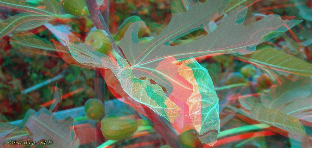Photos en 3D relief anaglyphelancer le diaporama ,puis sur la la loupe pour voir en plein écran.