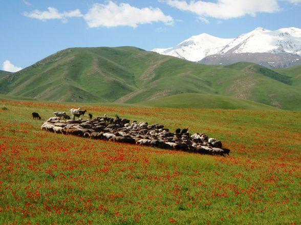Album - 17 - Kirghiztan