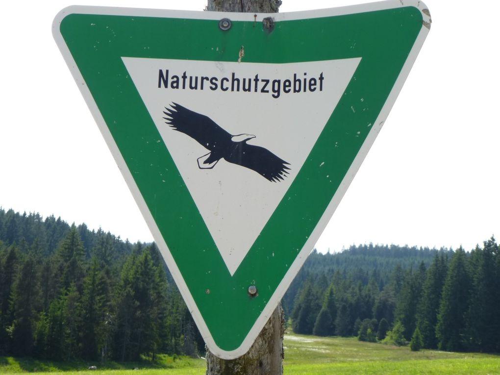 Découverte de l'une des plus vastes et remarquables tourbières humides d'altitude, de toute la Forêt-Noire germanique : le Blindensee (990 m) et son curieux étang aux eaux noires, sa végétation extraordinaire et surtout, ses exceptionnelles dro