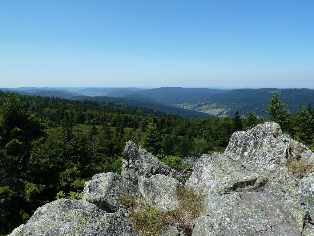 Découverte dans les Hautes-Vosges, de l'une des plus remarquables chaumes sommitales vosgiennes : celle du Tanet, altitude maximale de 1292 mètres, dominant la vallée de Munster et la plaine rhénane !