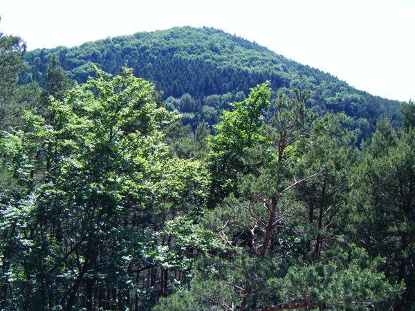 Découverte de la partie Ouest du massif du Heidenberg, situé dans le Palatinat allemand, au-dessus de Busenberg : le rocher-observatoire du Buchkammer (Heidenkammern) !