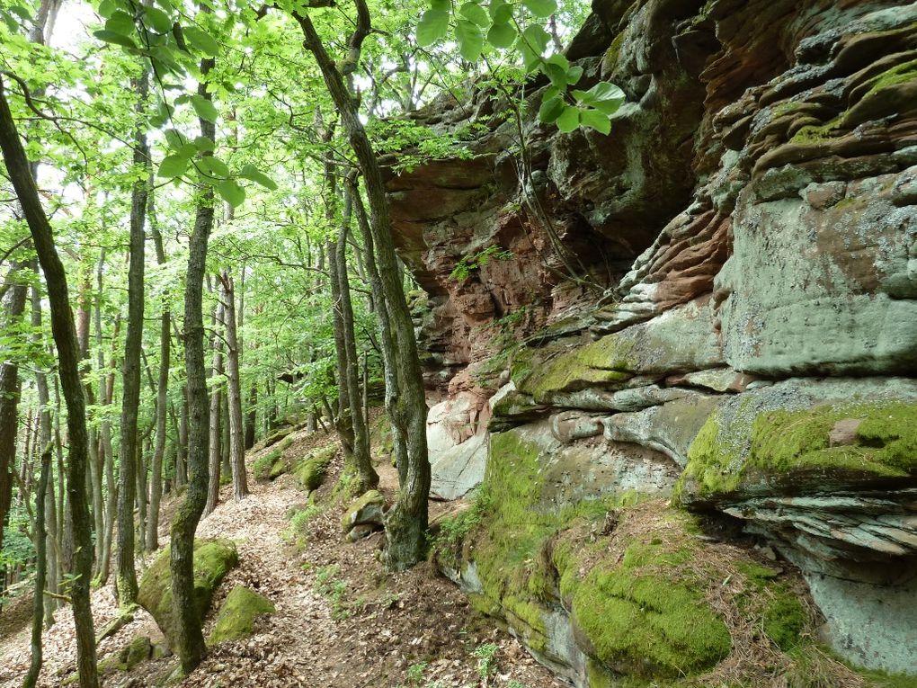 Découverte du voisin du célèbre Rötzenberg : le Dimberg, qui domine à la fois Dimbach, Lug et Völkersweiler, en plein coeur du Palatinat allemand.