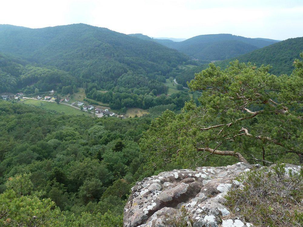 Découverte du premier grand rocher palatin, situé le plus près de la frontière franco-allemande : le Hirtsfels, dominant Hirschthal (Allemagne) et faisant face au château-fort du Fleckenstein (France) !