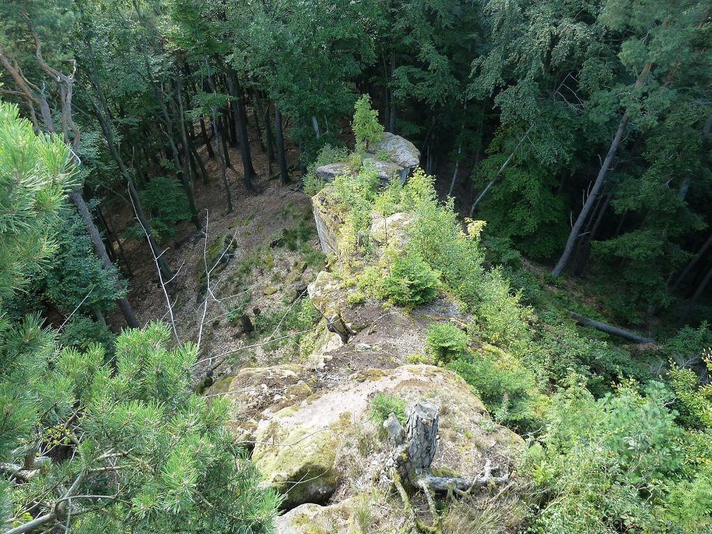 Découverte d'une montagne peu connue et peu courue du Wasgau (Palatinat allemand) : le Jüngstberg et ses 488 mètres d'altitude, localisé au Sud de Busenberg et à l'Est de Bundenthal ! Dépaysement et originalité garantis !