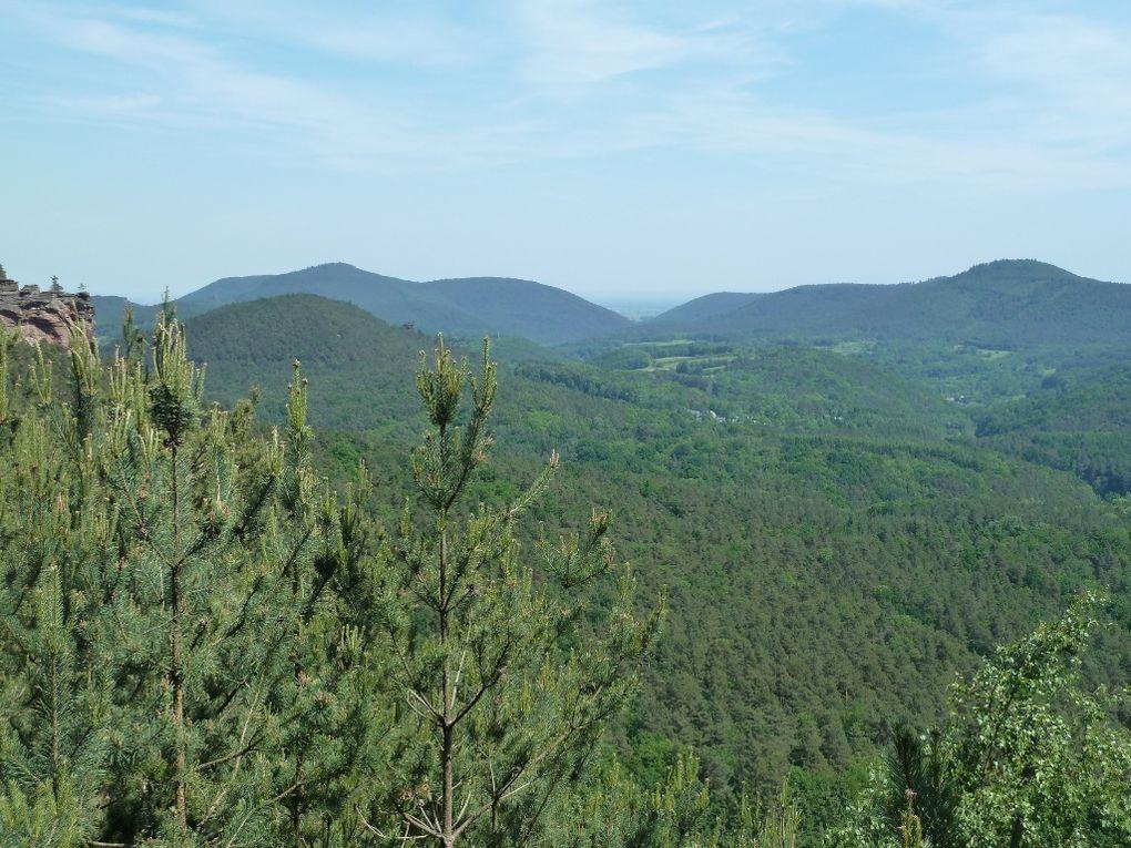 Découverte d'une crête rocheuse méconnue et sauvage du Palatinat allemand, située au-dessus de Dimbach : l'Immersberg !