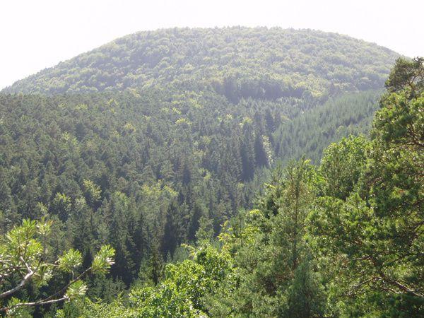 Découverte de la crête rocheuse la plus exceptionnelle et sauvage de Dahn et du Wasgau : le Lämmerfels !