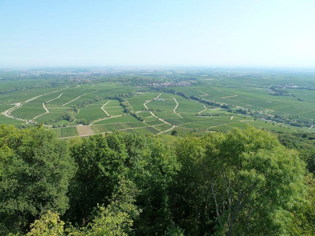 Découverte de l'un des plus remarquables sites panoramiques sur la plaine et le vignoble palatins : le Neukastell, dans le pays d'Annweiler-am-Trifels, au-dessus de Leinsweiler !