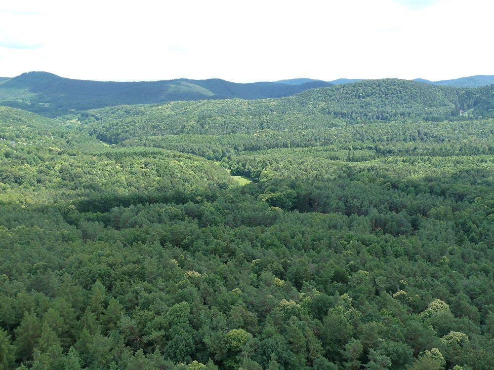 Découverte de l'un des grands sites d'escalade du Palatinat allemand : le Rötzenberg, situé au-dessus de Gossersweiler.