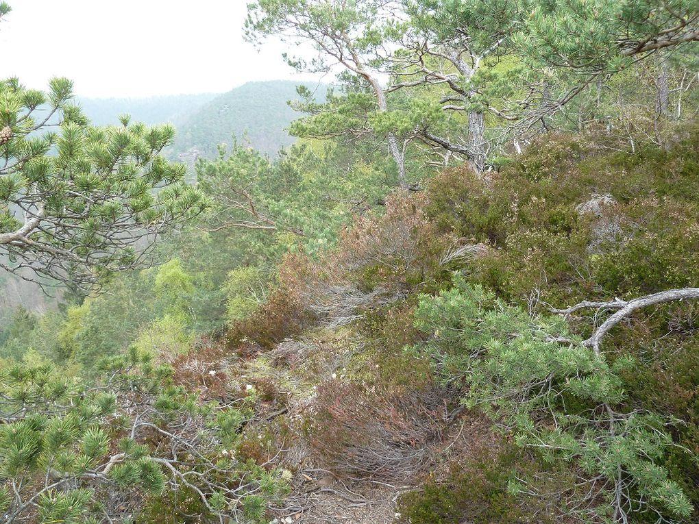 Découverte d'un site d'escalade sportive remarquable, de la vallée de la Bärenbrunnerhof : le Sternfels !