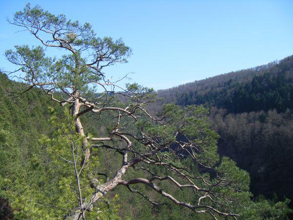 Découverte du plus sauvage et méconnu rocher de la vallée du Glasental, à Erfweiler : le Winterbergfels !