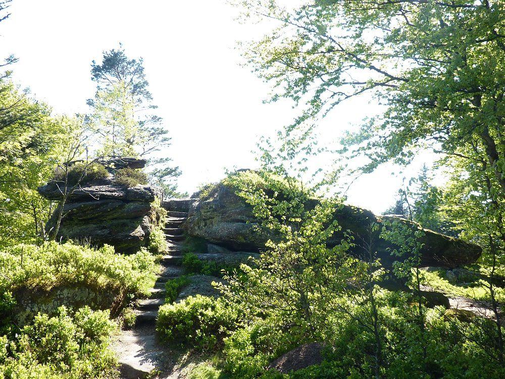 Découverte du point culminant de la Suisse d'Alsace (Wangenbourg-Engenthal) : le mythique Schneeberg (961 m).