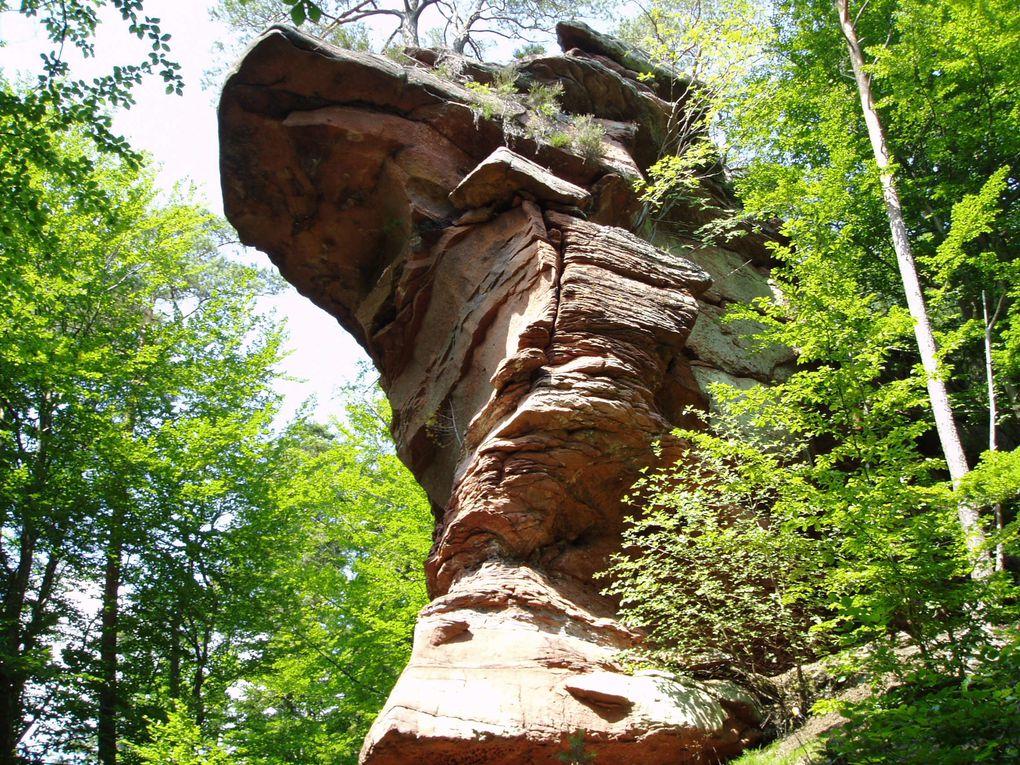 Découverte de l'un des sites rocheux situés au plus près de chez moi : le Rocher des Bécassines (ou Schnepfenfels) !