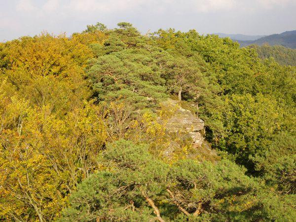 Le fabuleux site des Erbsenfelsen (Rocher de l'Arche), au début des années 2000, dans toute sa splendeur sauvage ! Un véritable chef d'oeuvre de Dame Nature, à valoriser et à sauvegarder par tous et pour l'éternité !!!