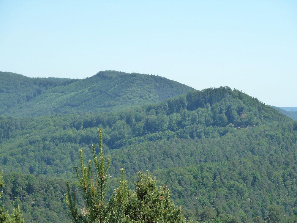 Re-découverte de l'exceptionnel site panoramique du Koetzfels, avec son échelle d'accès remise au goût du jour, grâce à Monsieur le Garde Forestier Francis Hoffmann (triage de Dambach, 67110) !