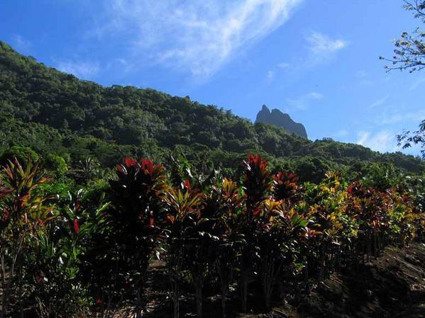 Ascencion du col des trois cocotiers par le chemin de la maison de la nature. Moorea