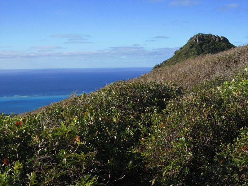 Ile des Australes. Au programme du séjour : vélo, plongée, randonnée et nage avec les baleines.