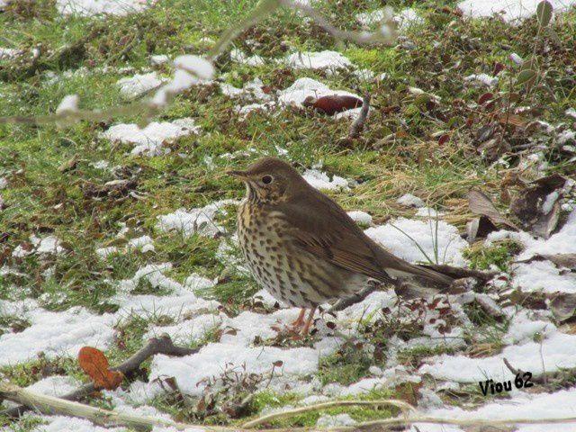 Album - Les-oiseaux-du-jardin-2012-13