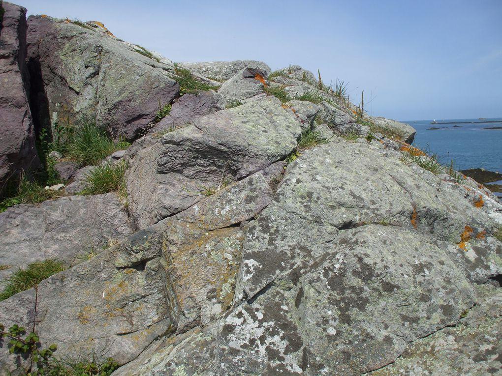 Les images d'une sortie géologique au départ de la Tour de Kerroc'h pour aller vers la chapelle de la Trinité en passant par Pors-Even