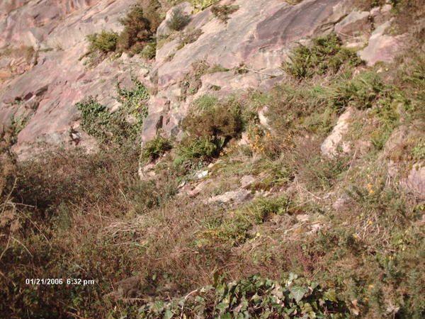 Les carrières de Kérity à Paimpol ont été exploitées pour extraire le grès des formations de Plourivo. Matériaux utilisé dans la construction dans le Goëlo.