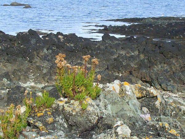 Les formations volcaniques de Guilben à Paimpol montrent des pillow-lavas et un filon de kératophyre