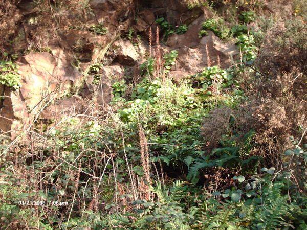Kerarzic est situé sur le territoire de kerity près de paimpol non loin de l'abbaye de beauport. Le site présente des formations géologiques et notamment des pépérites.