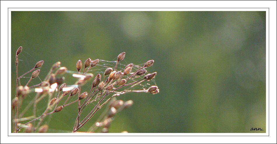 fleurs plantes arbres vegetaux