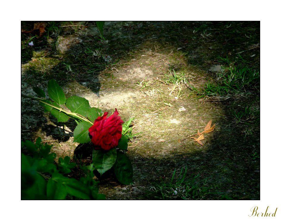 comme son nom l'indique: de la flore et des jardins que j'ai visité