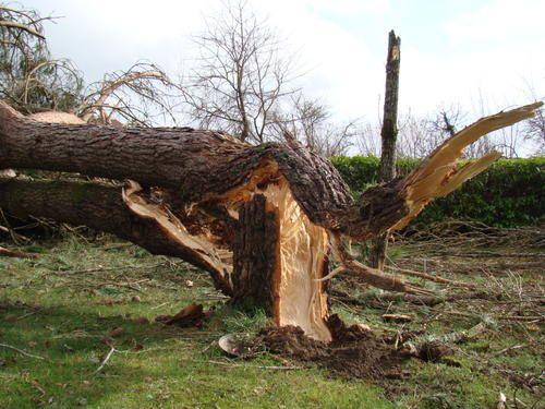 Je vous présente ici les photos que j'ai fait au lendemain de la tempête dans les Landes et dans le Sud Ouest.