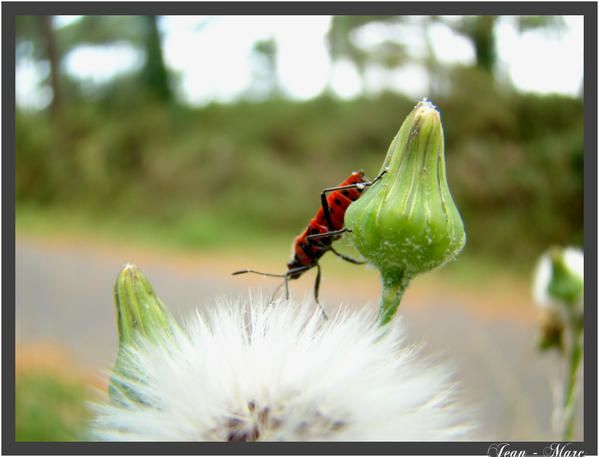 Album - macro---photo-animali-re