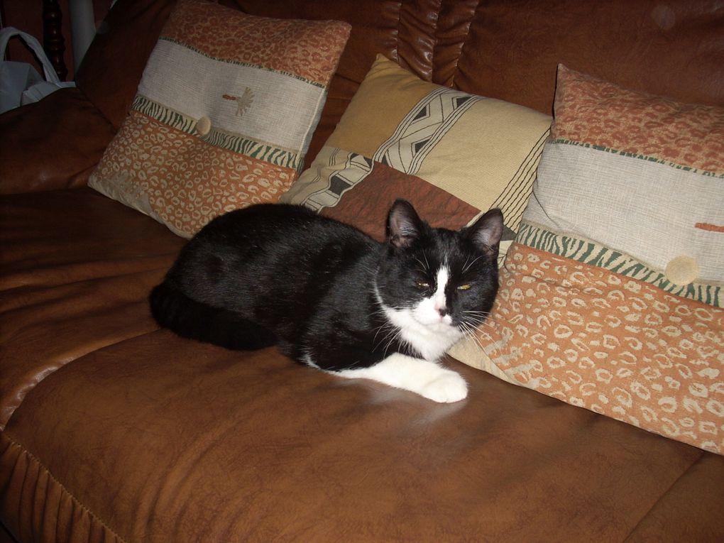 chat de notre clinique veterinaire .