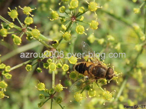 fleurs, insectes et paysages d'une petite rando dans les Pyrénées