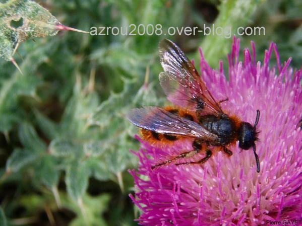 Photos d'insectes et autres bestioles croisées dans la journée, généralement en forêt d'Azrou dans les montagnes du Moyen-Atlas au Maroc... scorpions, araignées, fourmis, ânes, papillons, abeilles ou cigales sont présents dans cet album