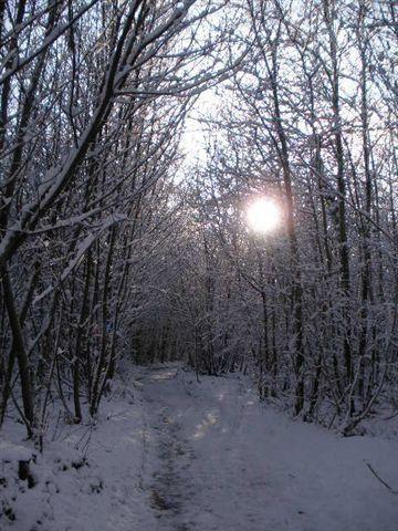 Album - photo neige