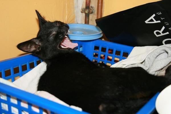 Mes chats à moi (Arsouille, Boogie, Diam's) et ceux de ma fille (Flèche, Silence, Java) que j'ai pris en photo.