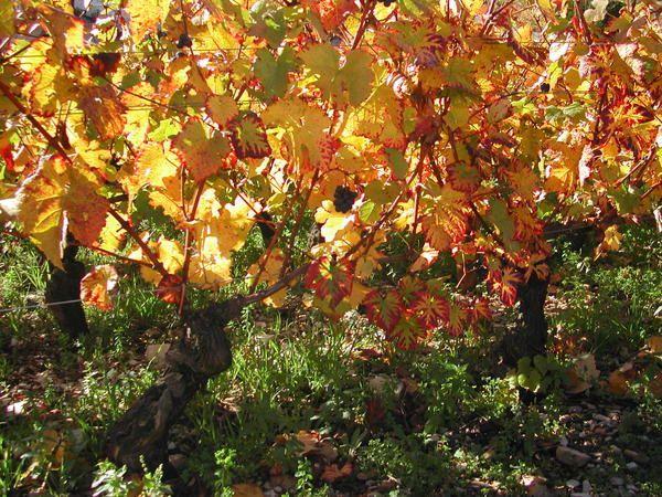 Album - la-nature-et-l-automne