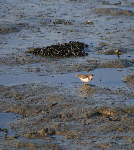 """Le Golfe du Morbihan doit être préservé à tout prix. C'est le milieu naturel d'un nombre considérable d'oiseaux migrateurs. Beaucoup d'ailleurs y ont élu domicile du fait de la douceur de son climat.Le Mor-Bihan signifie """"petite mer"""" et compo"""