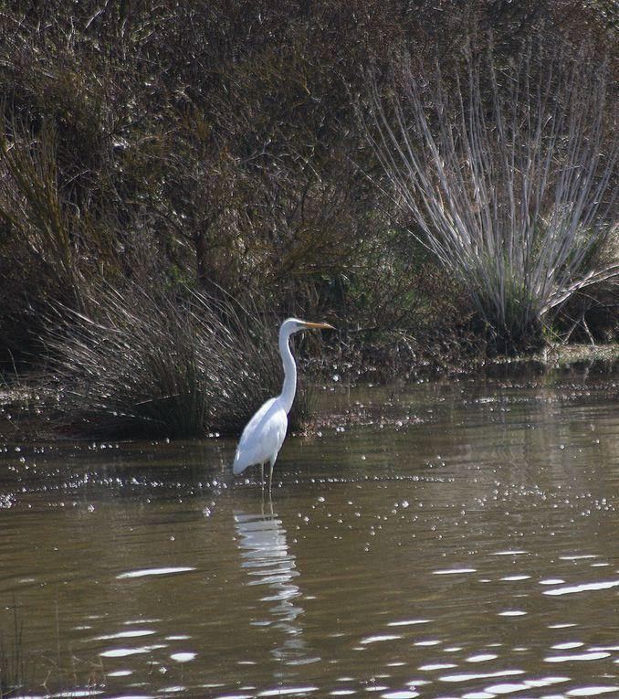 Album - les-oiseaux-au-bord-de-l-eau