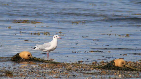 Album - les-oiseaux-du-littoral