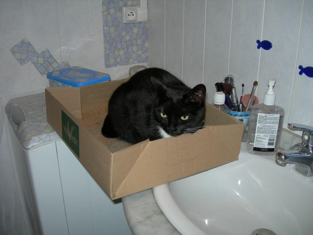 Ma petite chatte de 2 ans , trés espiégle et surtout curieuse
