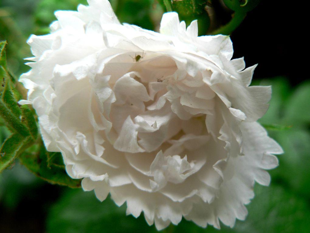 Album - mes petites fleurs