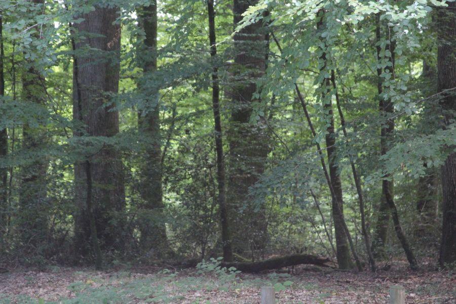 Album - Histoires-d-arbres-suite