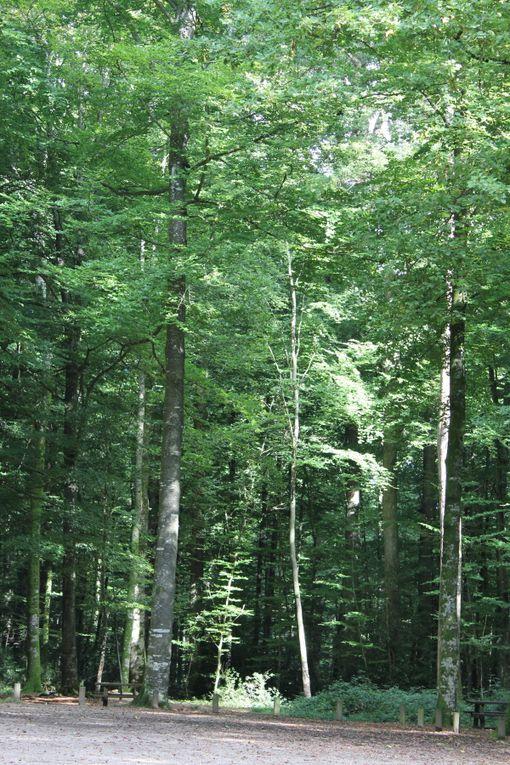 Album - Histoires-d-arbres