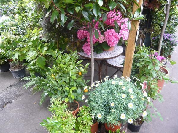 Le marché aux fleurs dans l'île de la Cité, à Paris