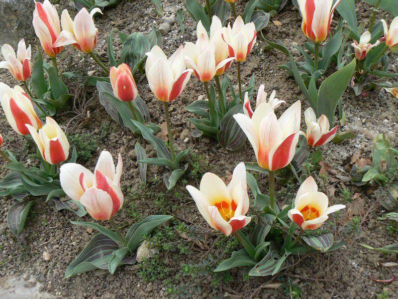 Fleurs et arbustes en fleur, printemps au Parc floral de Paris, avril 2009.