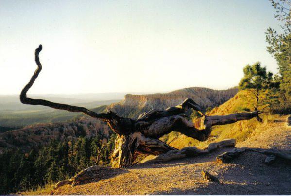 """les arbres, fascinants ...tordus, dépouillés, seuls, vaporeuxma posture préférée au yoga : """"l'arbre"""", une posture d'équilibre..."""