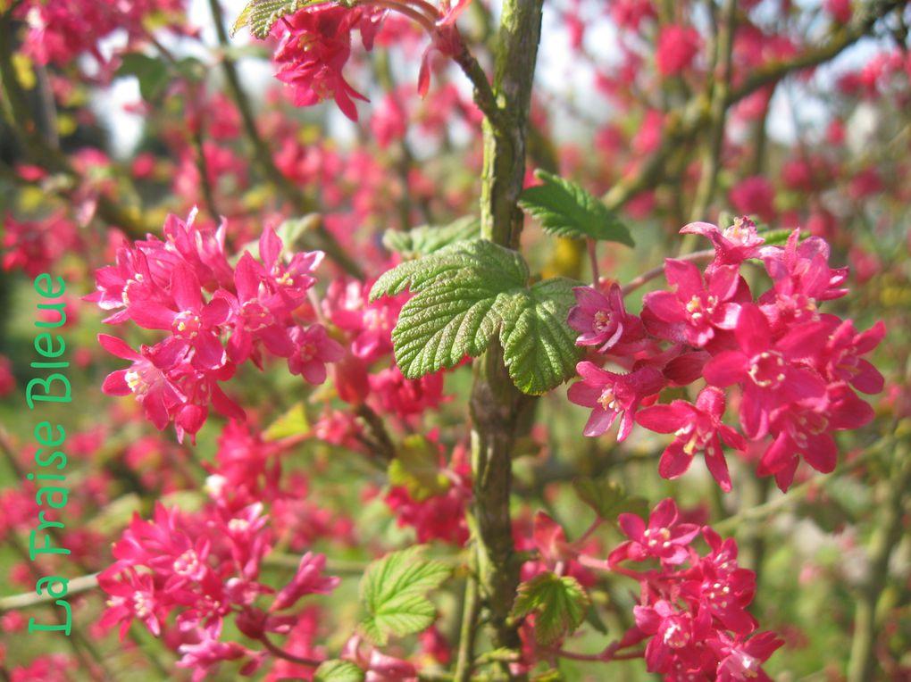 Album - Mon-jardin de fleurs