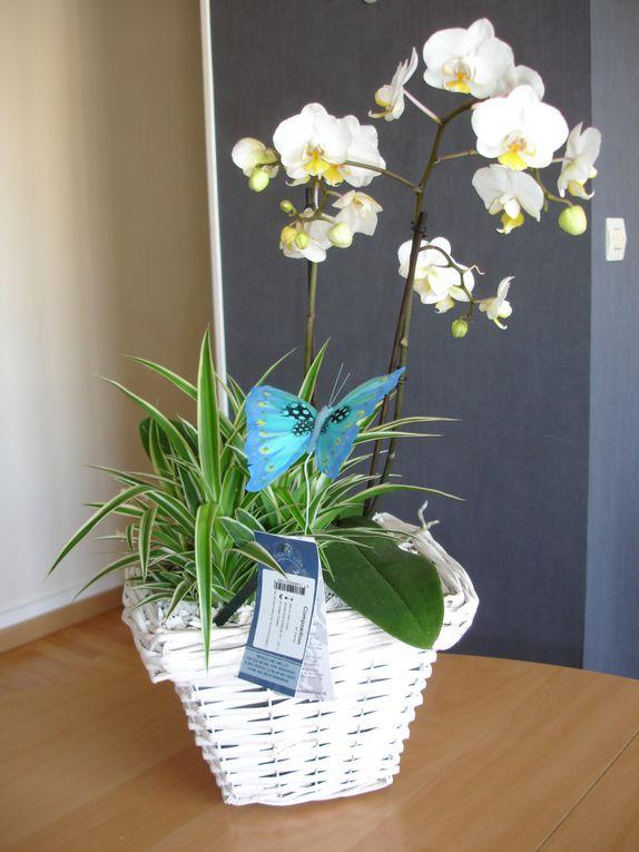 Album - Fleurs et Bouquets